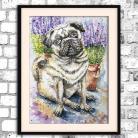 Ilustracje, rysunki, fotografia akwarela,mops,obraz,pies,jasny