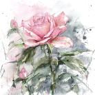 Ilustracje, rysunki, fotografia akwarela róża,obraz,lipowska,malarstwo,kwiaty