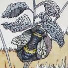 Ilustracje, rysunki, fotografia pszczoła,owady,ilustracja,rysunek,na ścianę,